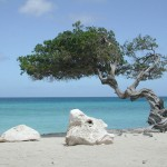 sardegna italian beach tree on sand sea mediterraneum